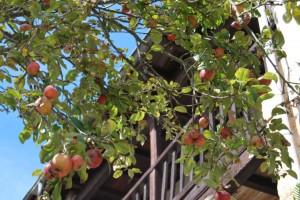 manzanos en una casa tradicional